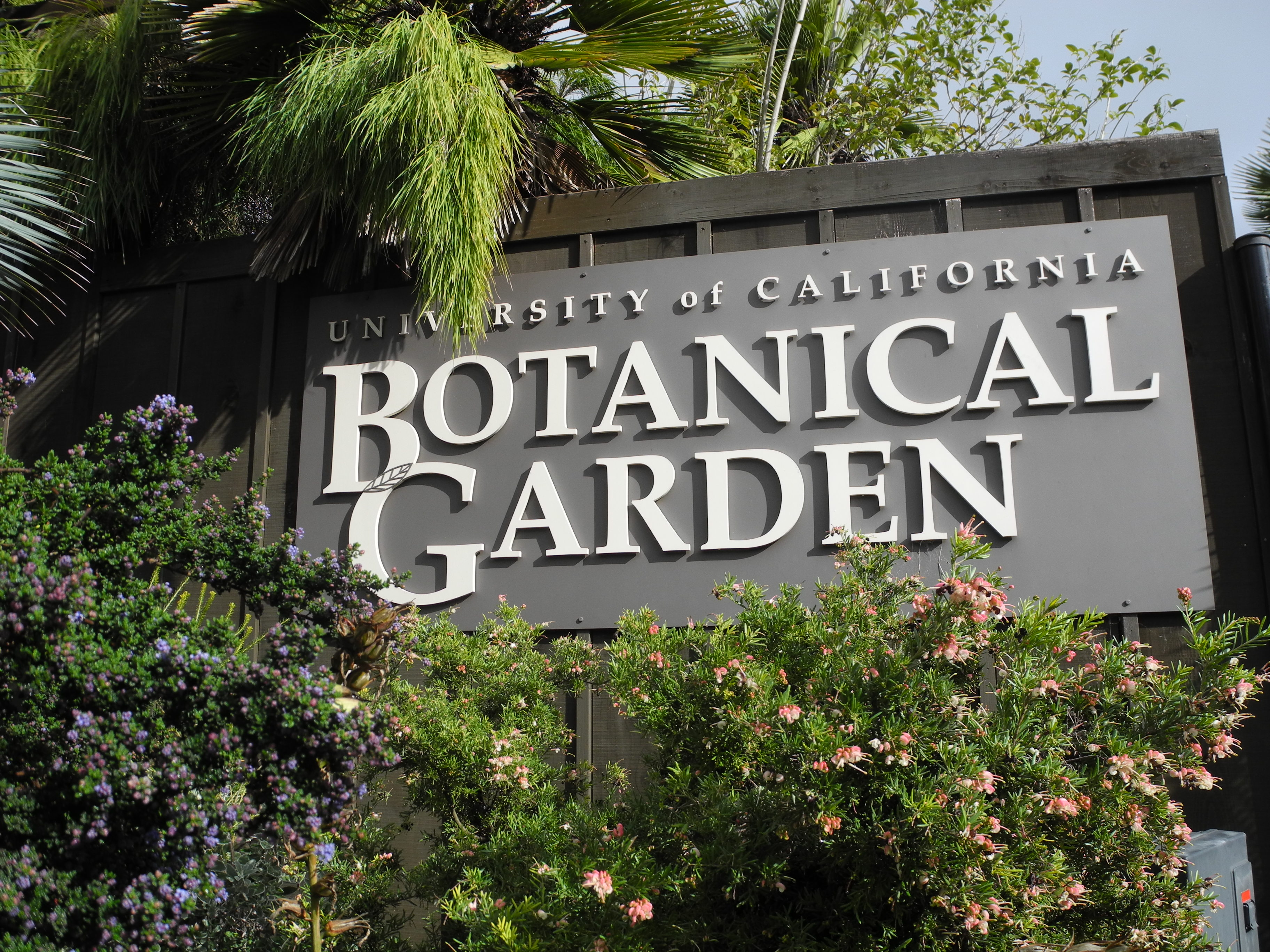 uc botanical gardens a photo essay wayfaring amanda image